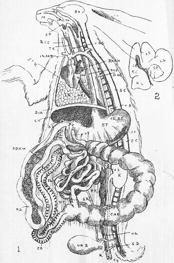 The Project Gutenberg eBook of Text Book of Biology, Part 1 ...
