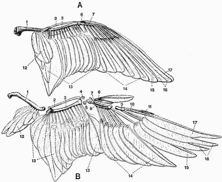 The Project Gutenberg Ebook Of The Vertebrate Skeleton By Sidney H