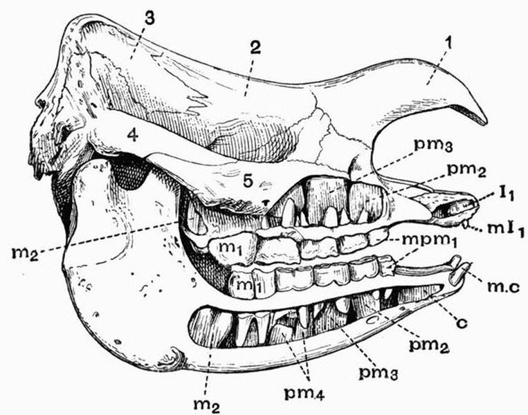 The Project Gutenberg eBook of The Vertebrate Skeleton, by