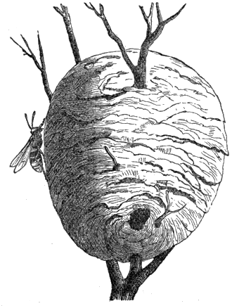 Insect Architecture, by James Rennie, a Project Gutenberg eBook