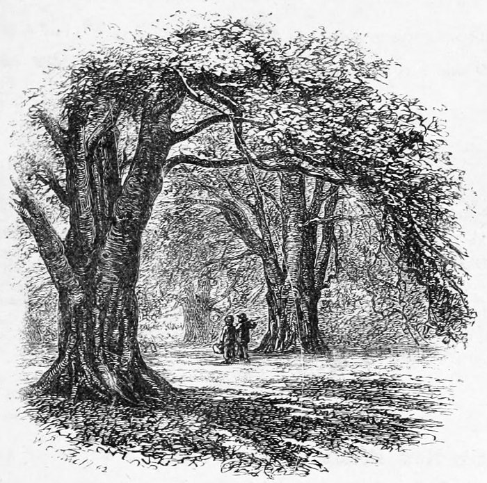 The New Forest: a Project Gutenberg eBook