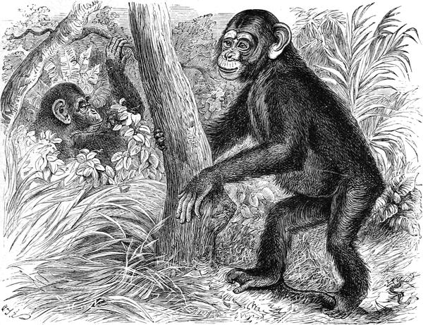 d49ec6188f The Project Gutenberg eBook of Cassell's Natural History, Vol. I, by ...